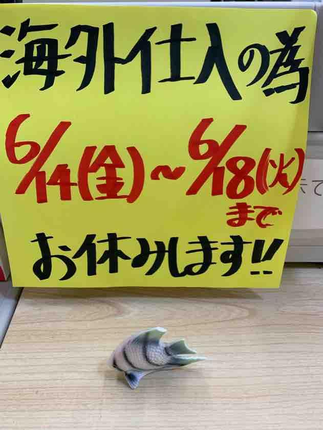 タイへ初海外仕入れ|アクアライク|愛知県安城市|水槽販売・買取/大型魚(熱帯魚)販売/淡水エイ