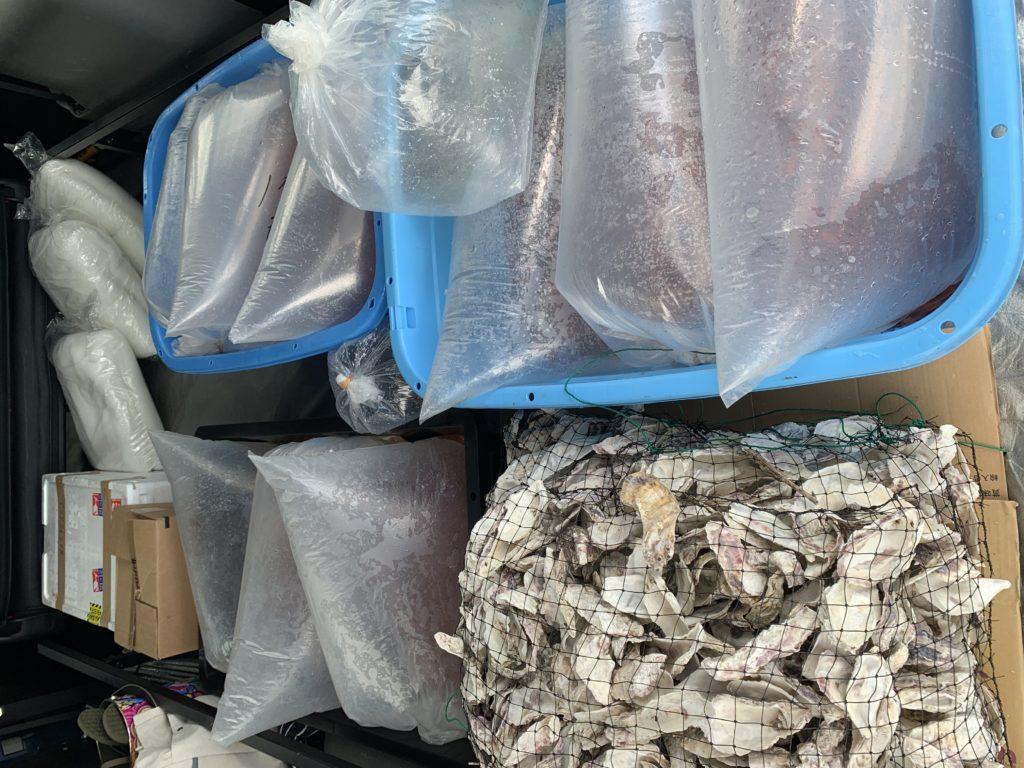 弥富金魚大量入荷!!|アクアライク|愛知県安城市|水槽販売・買取/大型魚(熱帯魚)販売/淡水エイ