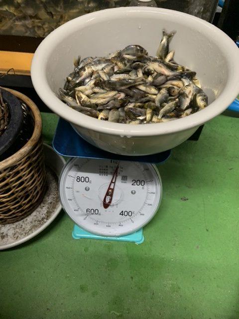 アクアライク|愛知県安城市|水槽販売・買取/大型魚(熱帯魚)販売/淡水エイ