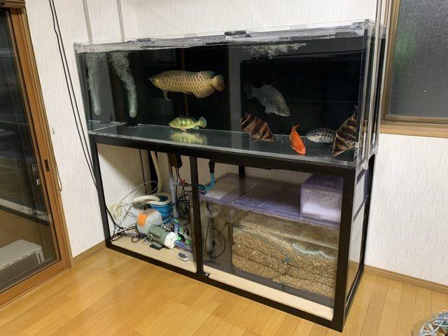 180水槽設置!!|アクアライク|愛知県安城市|水槽販売・買取/大型魚(熱帯魚)販売/淡水エイ